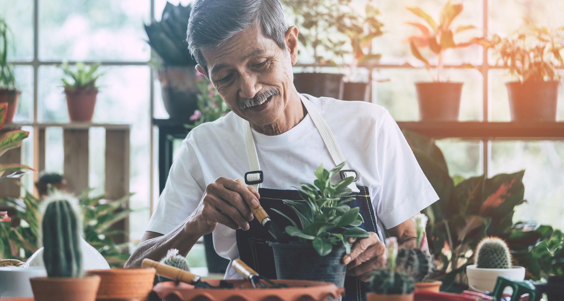 Elderly man gardening in green house
